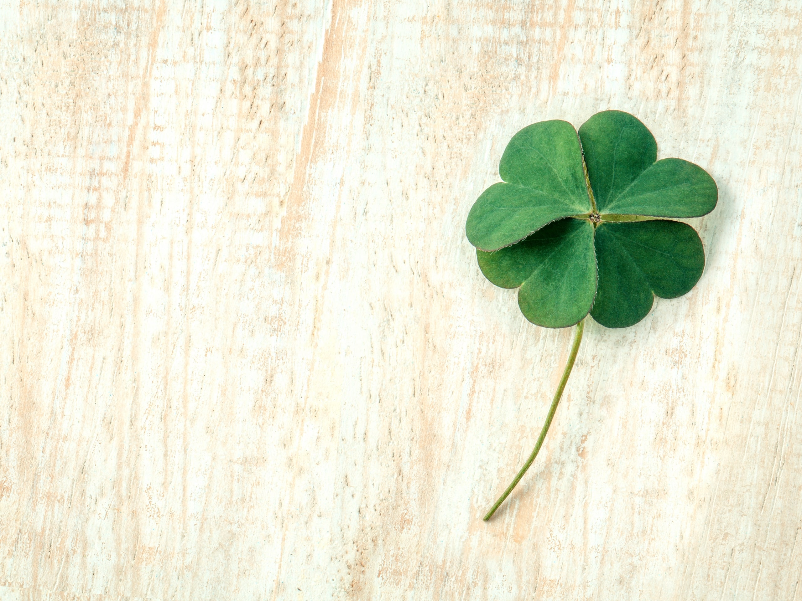 6 St. Patrick's Day Emails We Love from Target, Bouqs and Chubbies