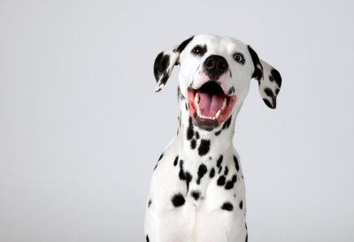 Why personalization is crucial for pet retailers