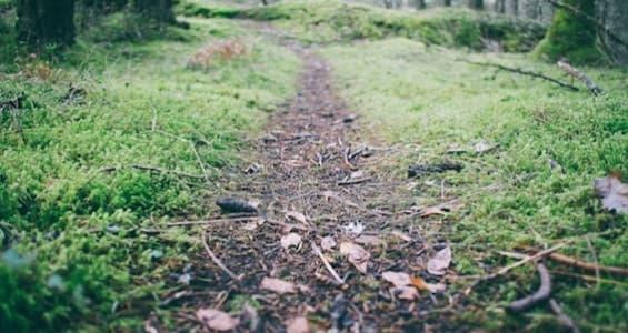 forest-moss-path-1058.jpg